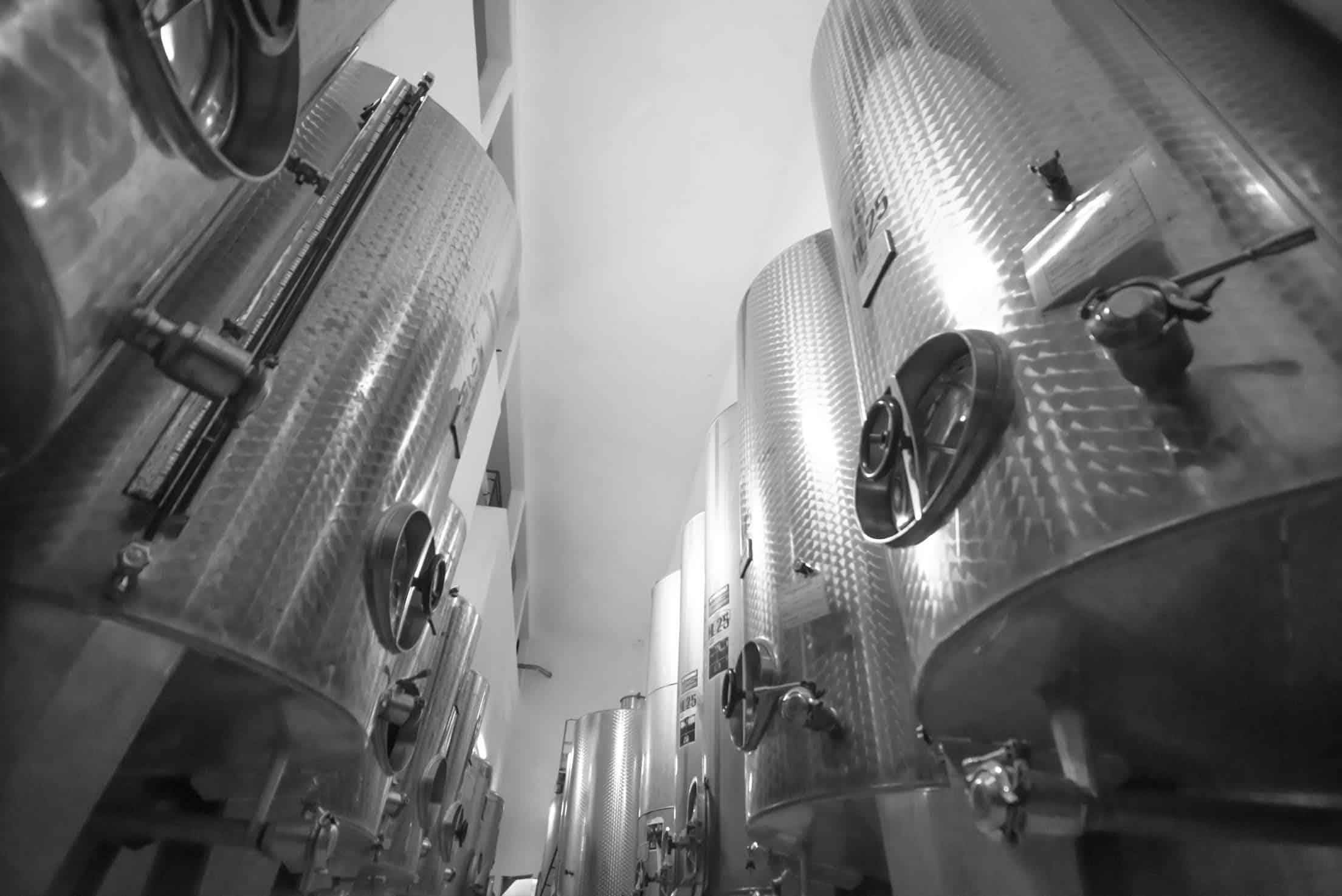 Produzione vino in Sardegna - Cantina del Mandrolisai