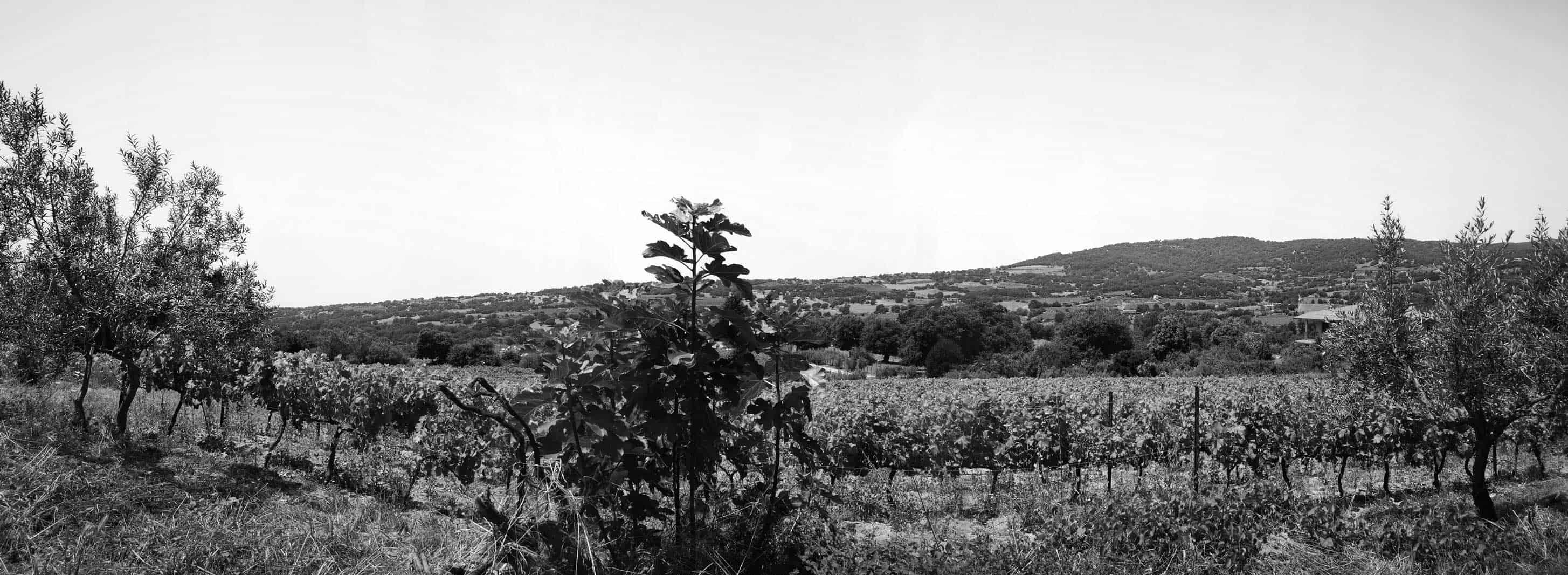 Vigneti a Sorgono, in Sardegna - Cantina del Mandrolisai